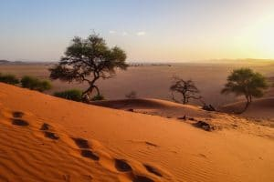 AFRICA: the urgent need to restore degraded ecosystems