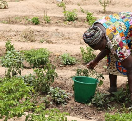 SAHEL: a project to intensify agroecological practices in plantations©BOULENGER Xavier/Shutterstock