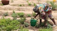 SAHEL : un projet pour intensifier les pratiques agroécologiques des plantations©BOULENGER Xavier/Shutterstock
