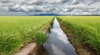 IVORY COAST: Power China launches the construction of the Raviart irrigation dam ©Gwoeii/Shutterstock