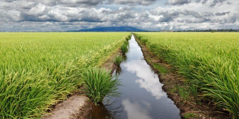 COTE D'IVOIRE : Power China lance la construction du barrage d'irrigation de Raviart ©Gwoeii/Shutterstock