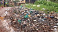 AFRIQUE : le continent s'attaque à la marée de déchets qui souillent l'environnement©P. Falchi/Shutterstock