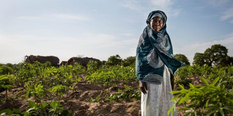 AFRIQUE DE L'OUEST : une irruption de maladies de plante menace la biodiversité©JonathanJonesCreate/Shutterstock