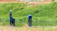 AFRIQUE : comment le continent a intègré la notion de protection de l'environnement© Roxane 134/Shutterstock