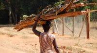 GUINÉE : le gouvernement interdit la coupe du bois pour stopper la saignée des forêts©Franco Volpato/Shutterstock