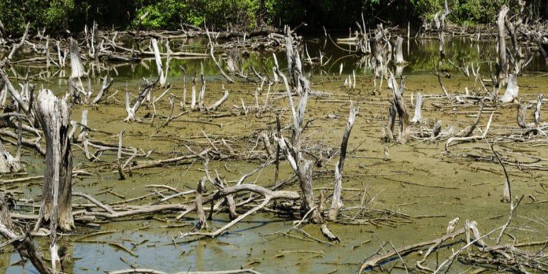 GABON : l'inquiétante dégradation des écosystèmes de mangrove à Port-Gentil©Mr.Black/Shutterstock