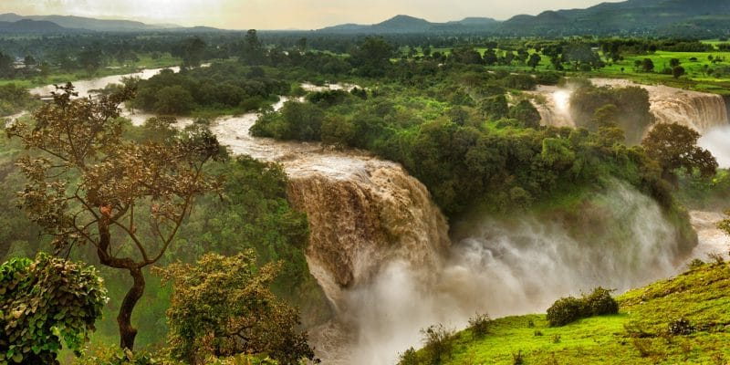 Journée mondiale de l'environnement : la restauration des écosystèmes en Afrique©Aleksandra H. Kossowska/Shutterstock
