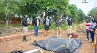 AFRICA: Six companies awarded for low-carbon projects©EcoGen
