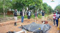 AFRIQUE : six entreprises récompensées pour des projets à faible émission de CO2©EcoGen