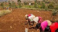 AFRIQUE : 3 projets distingués par le prix « AFD-GDN biodiversité et développement » ©AFD
