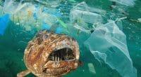 AFRIQUE : l'AFD et le FFEM financent la lutte contre la pollution plastique des océans©Rich Carey/Shutterstock