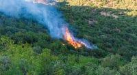 ALGÉRIE: les incendies d'origine criminelle ravagent le couvert végétal©MohamedHaddad/Shutterstock