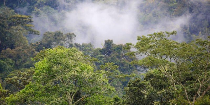 AFRIQUE : l'AFD et le FFEM cofinancent la 2e phase de Combo+, pour la biodiversité©JordiStock/Shutterstock