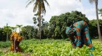 GAMBIA: Kanifing to convert organic waste into fertiliser and biomass©Riccardo Mayer/Shutterstock