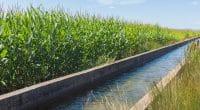 ÉGYPTE : le gouvernement modernise 2017 km de canaux d'irrigation©Alekk Pires//Shutterstock