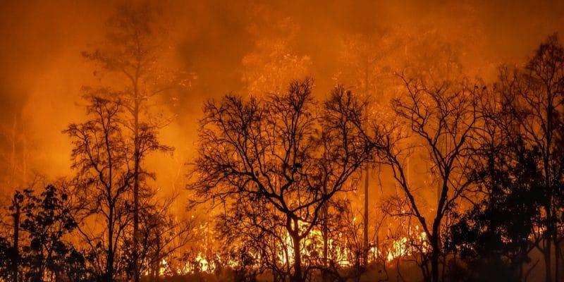 MADAGASCAR : un géoportail alerte contre les feux de brousse©Toa55/Shutterstock