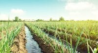 KENYA : le nouveau barrage d'irrigation de Kilimani Galana Buttress entre en service©Andrii Yalanskyi/Shutterstock