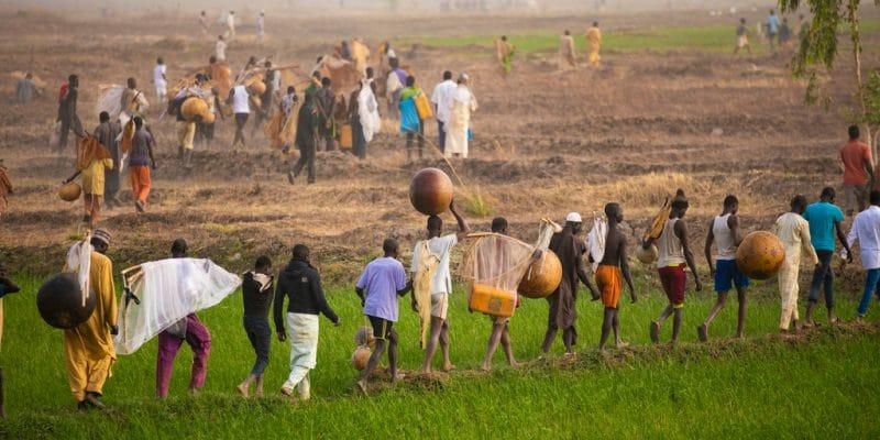 NIGERIA : Abuja fournit 3000 hectares de terres irriguées aux agriculteurs de Jigawa©Teo-Inspiro International/Shutterstock