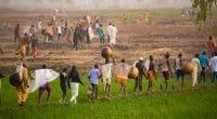 NIGERIA: Abuja provides 3,000 hectares of irrigated land to farmers in Jigawa©Teo-Inspiro International/Shutterstock