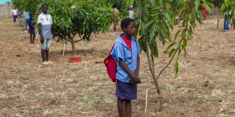 OUGANDA : les réfugiés planteront 50 000 arbres à travers le pays ©ivanfolio/Shutterstock