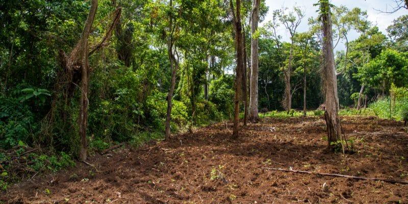 AFRICA: when CSR comes to the rescue of biodiversity©Alexwilko/Shutterstock