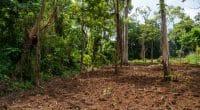AFRIQUE : quand la RSE vole au secours de la biodiversité©Alexwilko/Shutterstock