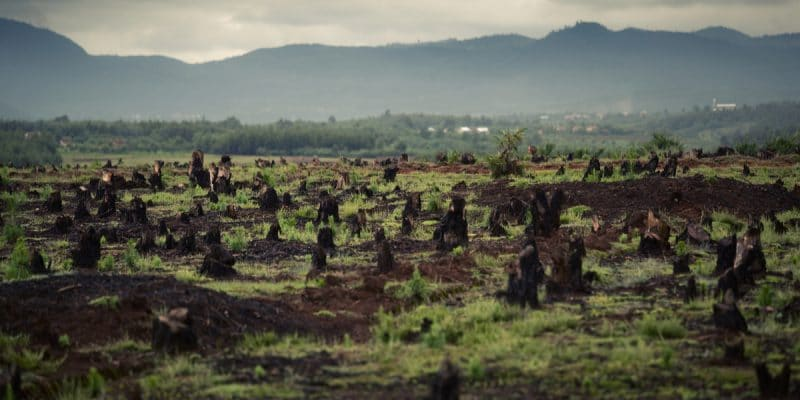 GHANA: Noé to restore 300,000 hectares of forest land ©Dudarev Mikhail/Shutterstock