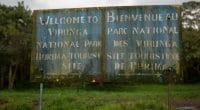 RDC : l'exploitation pétrolière dans le parc des Virunga divise©LMspencer/Shutterstock