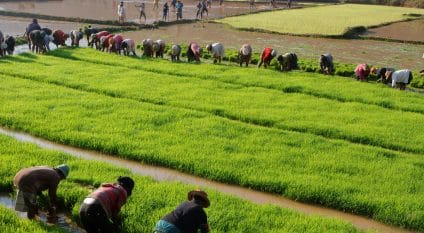 MADAGASCAR: The World Bank grants $40 million for irrigation development ©Pierre Jean Durieu/Shutterstock