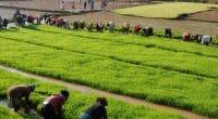 MADAGASCAR : la Banque mondiale accorde 40 M$ pour le développement de l'irrigation ©Pierre Jean Durieu/Shutterstock