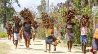 MALAWI : Berlin finance la restauration de 5 mille hectares de forêts à Ntcheu © Damian Ryszawy/Shutterstock