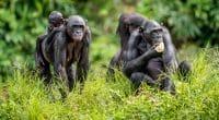 DRC: Removal of Salonga Park from World Heritage in Danger divides©Sergey Uryadnikov/Shutterstock