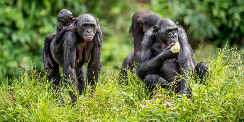 RDC : le retrait du parc de la Salonga du patrimoine mondial en péril divise©Sergey Uryadnikov/Shutterstock