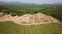COTE D'IVOIRE : 90% du couvert forestier a disparu en 60 ans©Rich Carey/Shutterstock