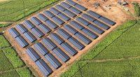 ZIMBABWE : Blockpower fournit du solaire hybride pour la production du thé à Chipinge© Blockpower