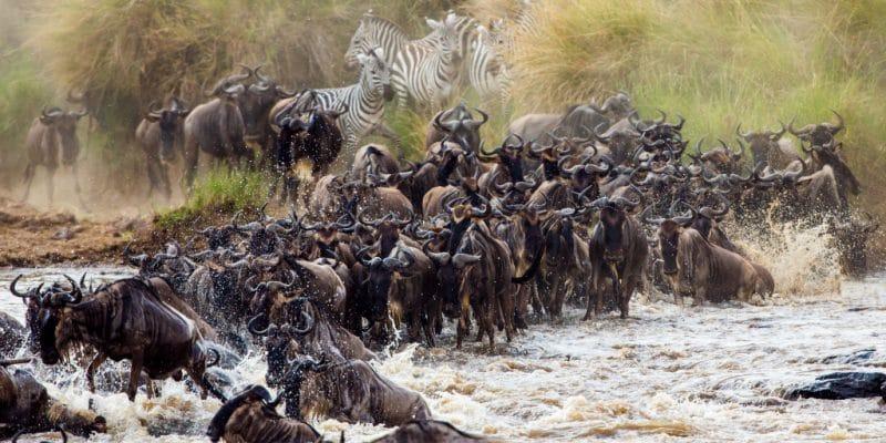 KENYA : avec KTB, TikTok sensibilise à la conservation de la biodiversité© GUDKOV ANDREY/Shutterstock
