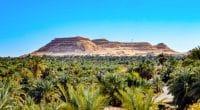 ÉGYPTE : Azelio installera 20 unités de stockage d'énergie pour l'agriculture écolo © Hazem omar/Shutterstock