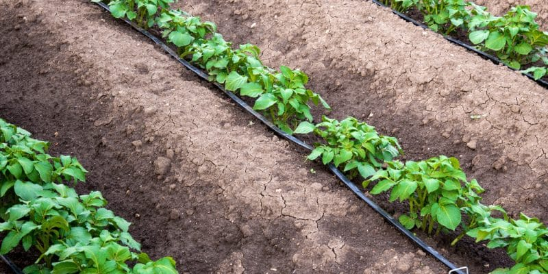 ÉGYPTE : moderniser les systèmes d'irrigation pour économiser de l'eau ©Diyana Dimitrova/Shutterstock