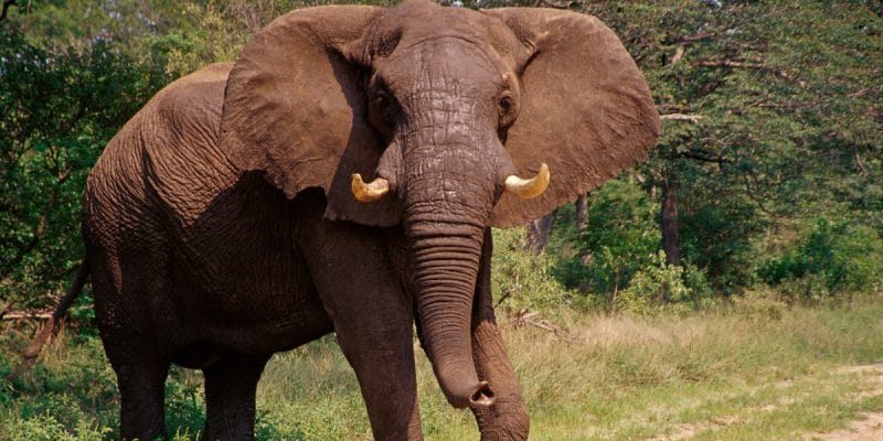 KENYA: Electric fence to reduce human-elephant conflict in Tsavo East©Chaton Chokpatara/Shutterstock