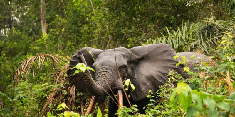 GABON: Ivindo Park listed as a UNESCO World Heritage Site, what is at stake?©Luke Wait/Shutterstock