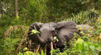 GABON : classement du parc d'Ivindo au patrimoine mondial de l'Unesco, quels enjeux ?©Shutterranger/Shutterstock