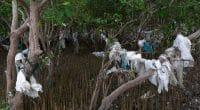 GABON: the degradation of the Mindoubé mangrove reaches its alert level©nofilm2011/Shutterstock