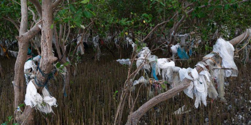 gabon-mangrove