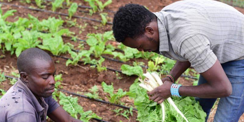 KENYA : le gouvernement promet 11 M$ pour l'irrigation dans le comté Nyéri©Billy Miaron/Shutterstock