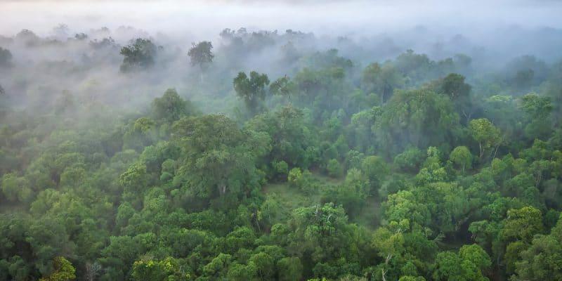 AFRICA: Congo Basin countries prepare for COP26©CherylRamalho/Shutterstock