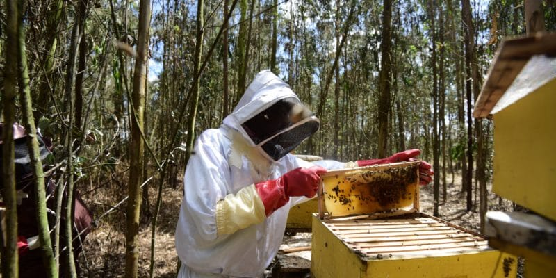 TANZANIA: EU invests $10m via Enabel for ecological honey production © Billy Miaron/Shutterstock
