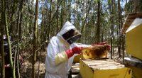 TANZANIE : l'EU investit 10 M$ via Enabel pour la production du miel écologique © Billy Miaron/Shutterstock