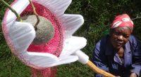 AFRIQUE : l'impression 3D pour transformer les déchets plastiques en outils agricoles ©Université de Loughborough