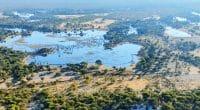 AFRIQUE : un partenariat pour la conservation de la faune dans le bassin de l'Okavango© Vadim Petrakov/Shutterstock