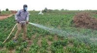 RWANDA: New solar pumps to irrigate 10 hectares of plantation in Ngoma©Rwarri